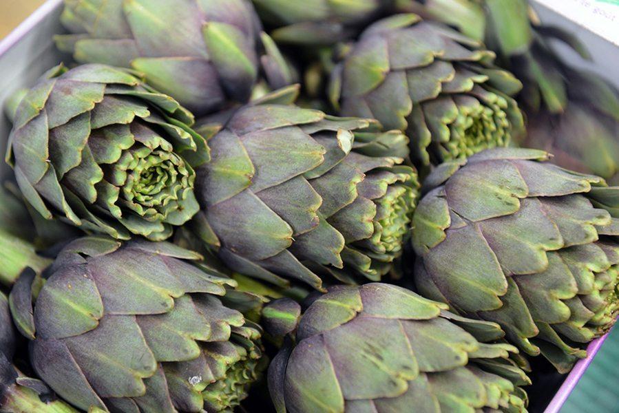 Vegetable protein vs animal protein