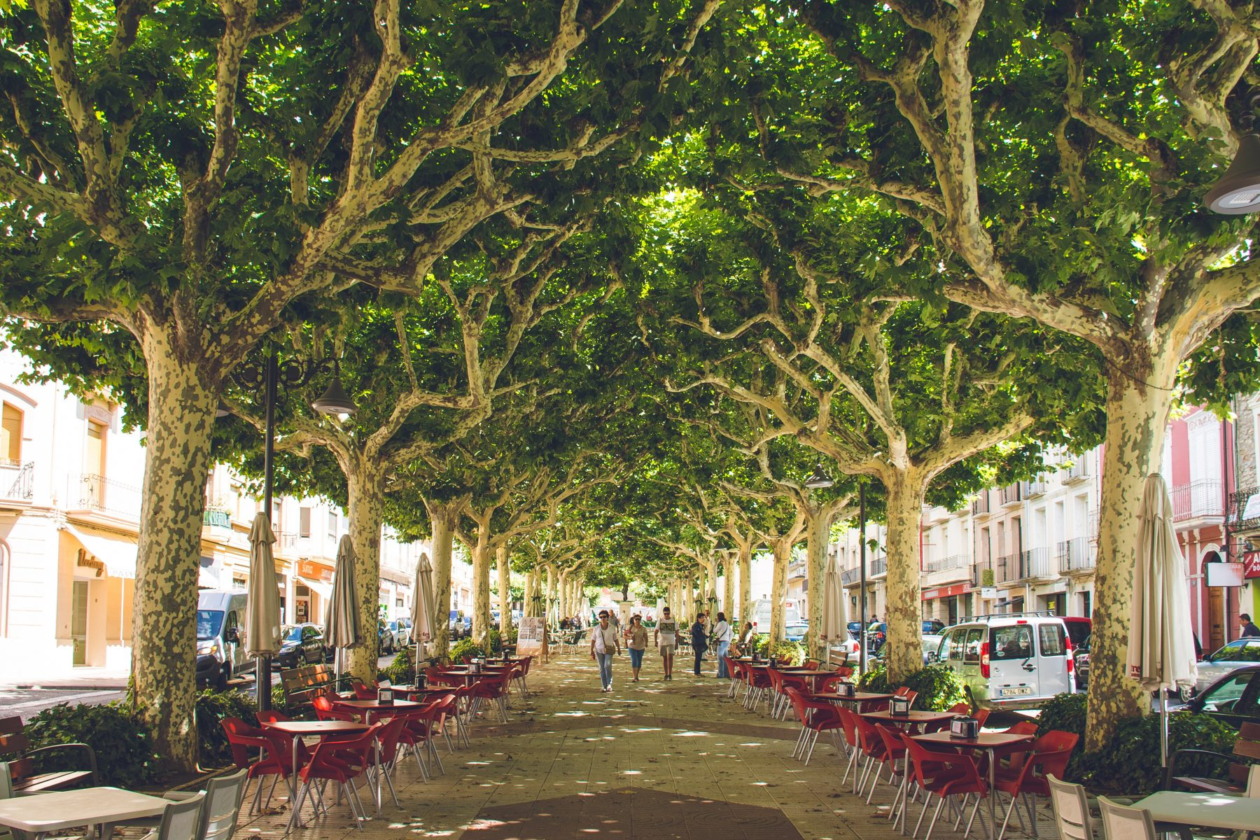 5 Benefits of Trees in Urban Areas