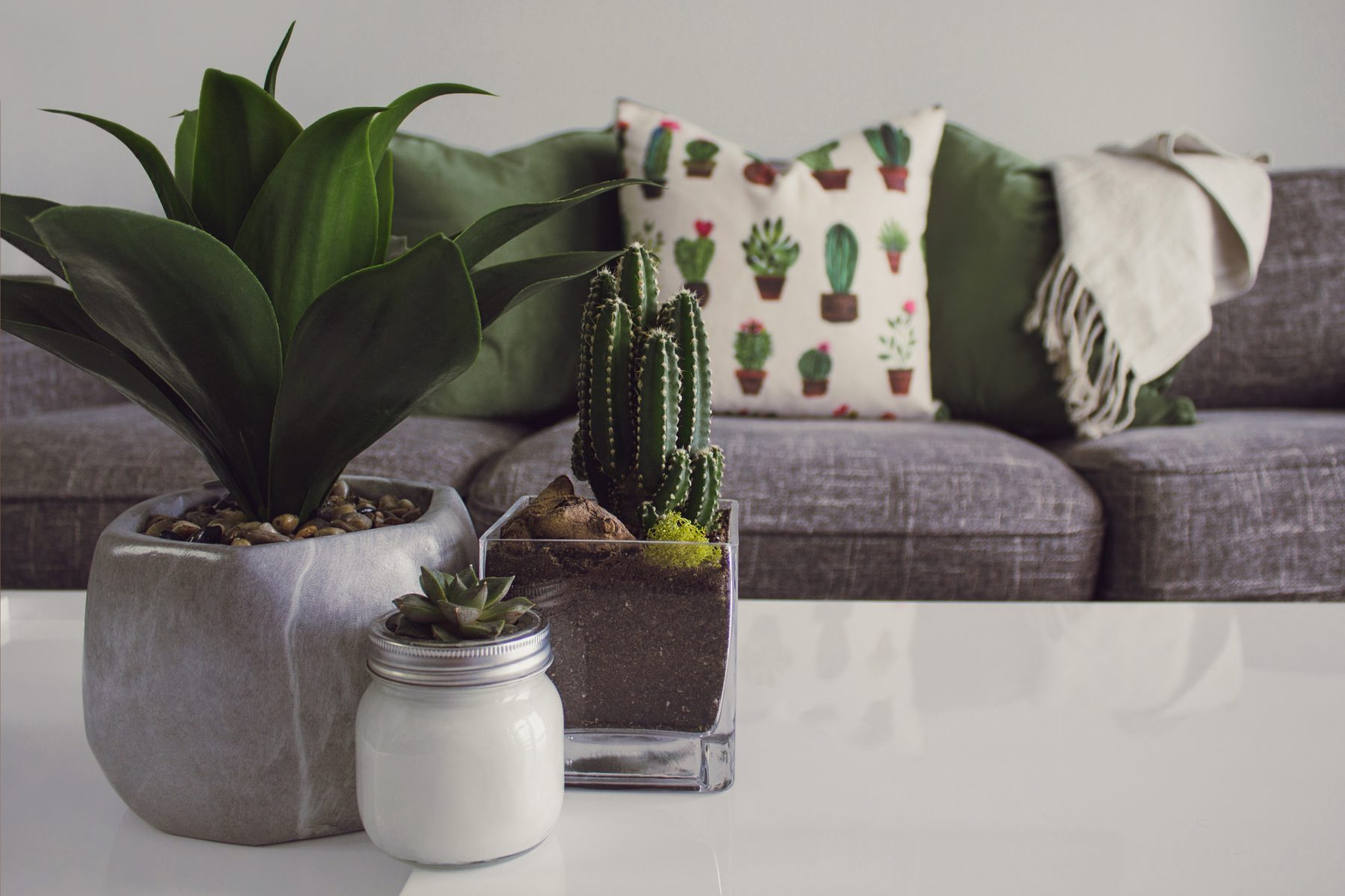 7 Benefits of Indoor Plants